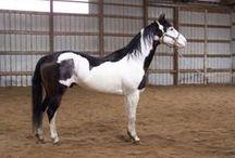 Horses I really like / by Sara Parker