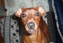 люси / о забавной собачке по имени Люси