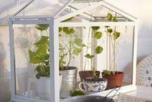 Plants / Gardening