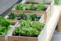 Gardening / Gardening technics, plantation, agriculture, agroecology and sustainable food systems.