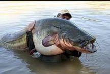 Big Game & Rekordfische