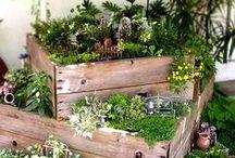 Yard and Garden / Outdoor Landscaping, Garden Ideas