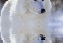Animals... white