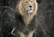 Beautiful Animals / Domesticated and wild animal photography.