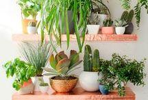 G R E E N E R Y / Greenery and plants