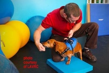 Canine Rehab / Helping our canine friends on the road to recovery. What stories touch your heart?