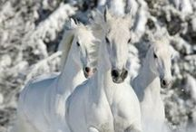 Horses / by Peter Bourget