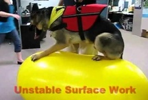 FitPAWS® Videos / Check out videos from our YouTube Channel and from our amazing fans!