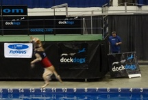 FitPAWS @ Dock Dogs World Championships