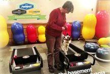 FitPAWS @ Westminster Canine Gym