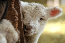 baby animals  / if you asking why i'm vegan