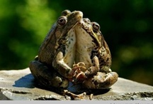 frogs are charming / have u ever imagined?