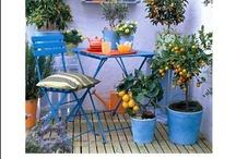 4 my micro balcony garden / and kitchen window