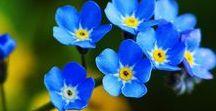 FLOWERS / Pidän paljon kukista! I love flowers!
