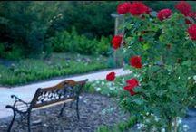 Gardens  / Gardens in Mazury (Poland) http://ogrodymarkiewicz.blogspot.com/