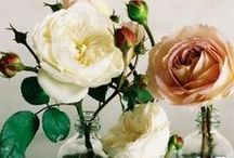 All about the roses / Celebrating the trend for romantic rambling roses