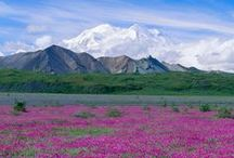 ALASKA My Home #1 / Spectacular views, fishing, hunting, wildlife,. Come explore!! / by Heather Robbins