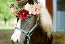 flower crowns >//< / flower crown flower child hippie wedding bride bridal head piece bridesmaids gypsy accessory