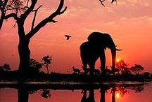 Zonsopgang- en ondergang / De mooiste zonsondergang en zonsopgang!