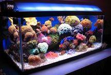 Aquariums / Fish Tanks, Marine and Fresh Water