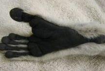 Lemurs / Inspiration for sculpture