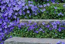 Trappor i trädgården / Vackra trappor i trädgården
