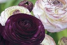 Wow - växtkombinationer / Vackra växtkombinationer