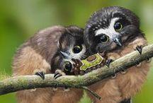 Birds of prey / Fun and very beautiful owls......love them