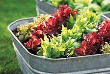Organic Gardening Mama