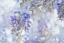 spring / by Kate McCredie