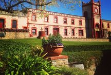 Places We Visit / Find hidden treasures & the finest artisan wines the Barossa has to offer.
