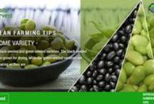 Soyabean Farming Tips