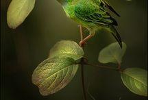 art and science / birds, bugs, botanicals; naturalist meets illustration
