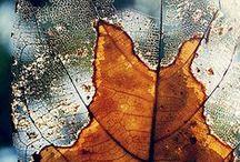 Leaves... / by Marisete Facchini Girardello