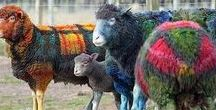 miscellaneous / What other people do with woolen blankets