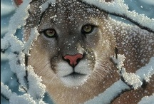 """Animals and Wildlife / This is my collection of my favorite wildlife and animal photography. You can see over 4500 more animal pictures on my Facebook """"Animals Are Awesome"""" page. / by Love Life"""
