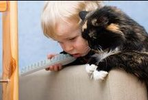 Animals - Pets