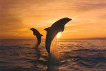 Animals - Sea Creatures