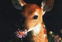 Lovely animals / Animals