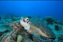 New Caledonia ニューカレドニア
