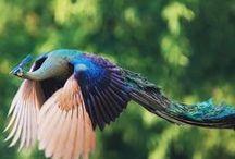 birds / birds, pajaros (Bachmors artist selection, Saatchi art)