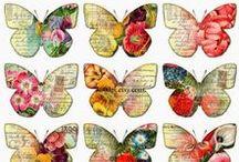 Motyle / butterfly