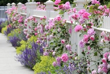 Gardens / Gardens and natural outdoor spaces I love - especially wild English gardens with lots of perennials, wildflowers, roses, and fences.