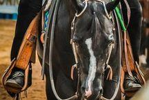 AQHA / American Quarter Horse Association proud member / by Kendall Renfro