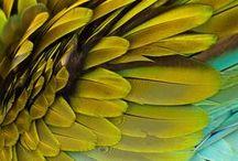 joyful yellow