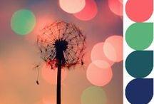 Color palletes