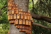 Birdnests /birdfeeders/birdbaths
