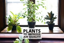 Eco Friendly DIY