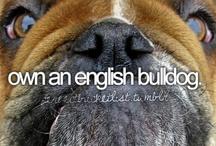 English Bulldogs / by Amy Strength