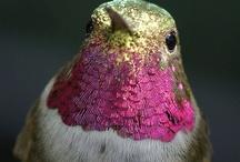 hummingbird sweetness